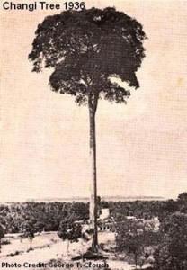 Changi Tree