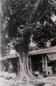 Fear of Tree 2