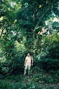 Rambutan Tree 4