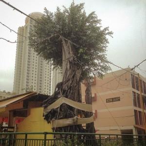 Toa Payoh Tree