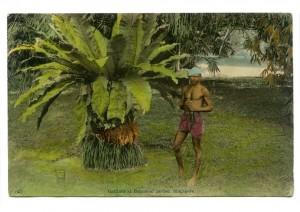 Chief Gardener