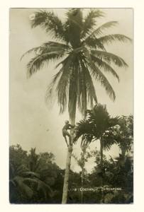 Tree Climbing Postcard